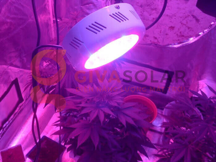 Đèn led trồng cây UFO 50W 10