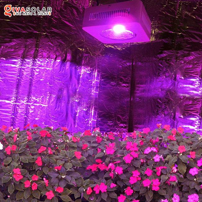 sai lầm khi sử dụng đèn LED quang hợp trong nông nghiệp 1