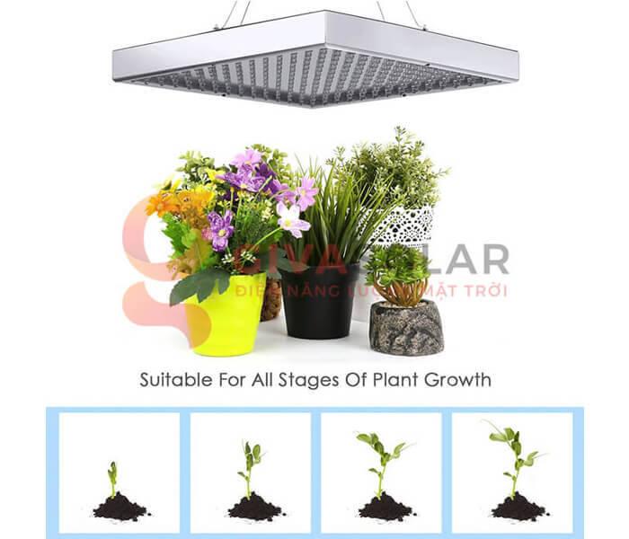 Xác định rõ mục đích sử dụng đèn LED trồng cây