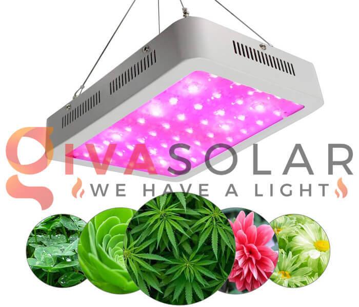 Kinh nghiệm chọn mua đèn LED trồng cây