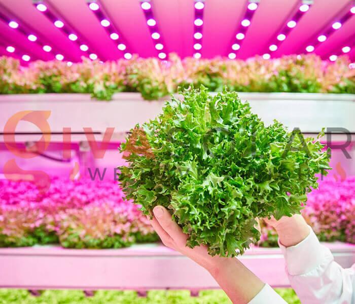 Cách sử dụng đèn LED trồng rau 1