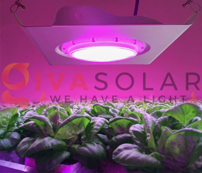 Cách sử dụng đèn LED trồng rau 2