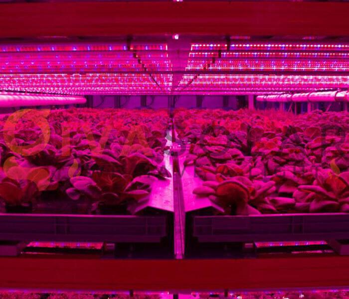 Cách sử dụng đèn LED trồng rau 4