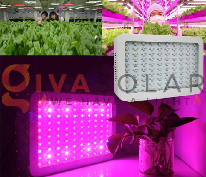 Cách sử dụng đèn LED trồng rau 5