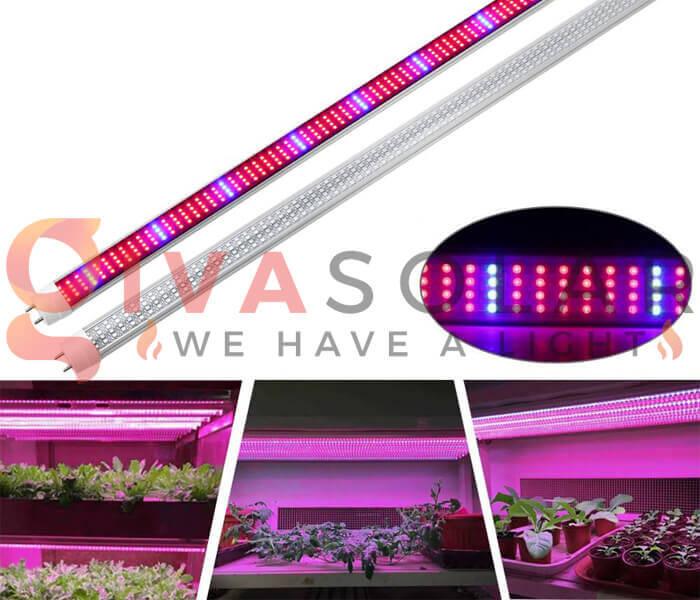 Cách sử dụng đèn LED trồng rau 7