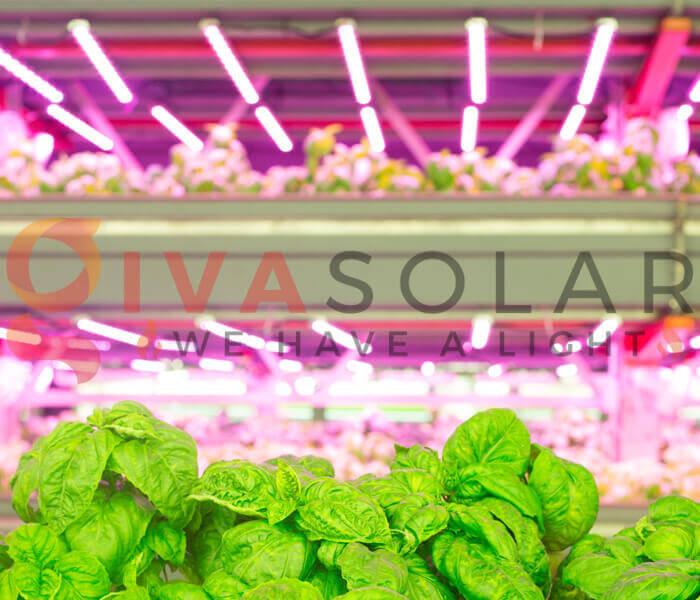 Cách sử dụng đèn LED trồng rau