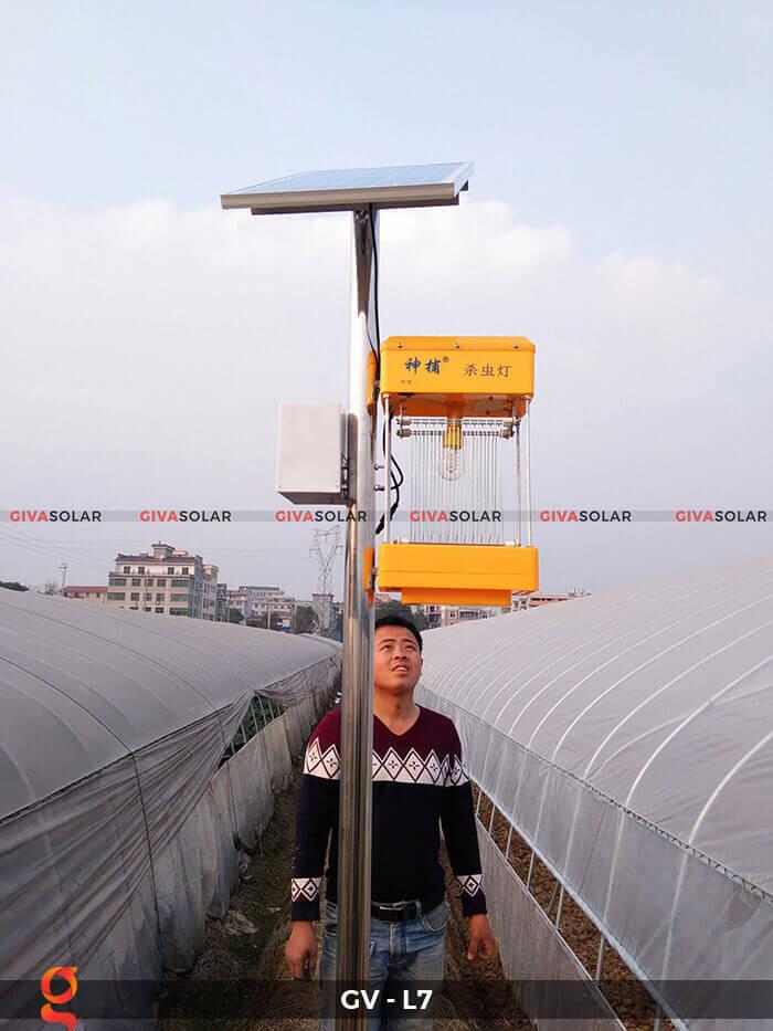 Đèn bắt côn trùng năng lượng mặt trời GV-MK-L7 5