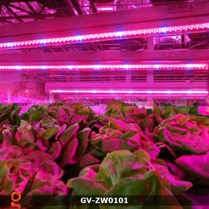 Dây đèn led quang hợp cho cây GV-ZW0101 4