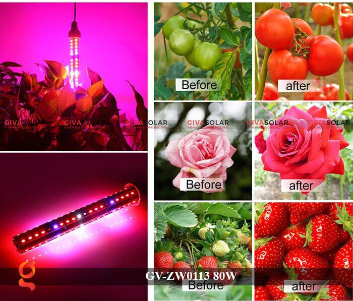 Đèn led trồng cây loại treo GV-ZW0113-1 80W 12