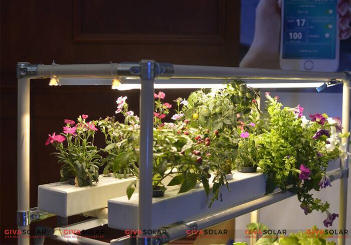Đèn led trồng cây trong nhà là gì
