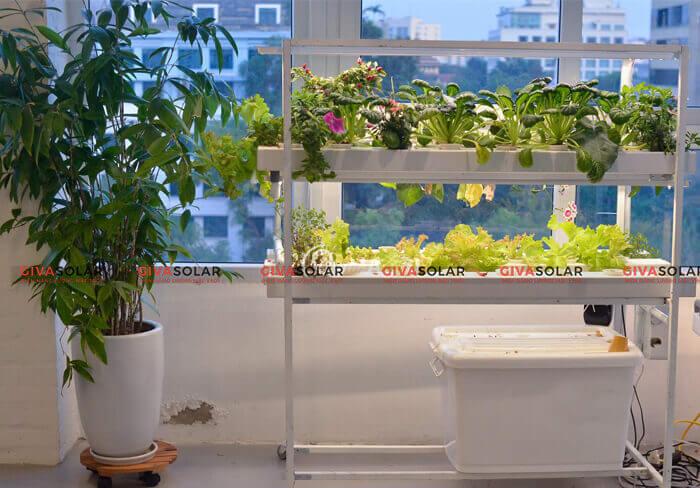 Lợi ích của việc trồng cây bằng đèn led quang hợp 3