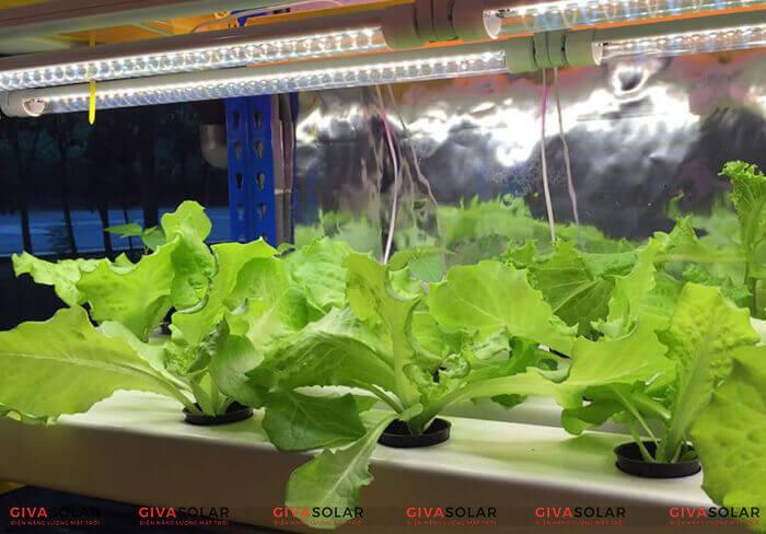 Lợi ích của việc trồng cây bằng đèn led quang hợp 2