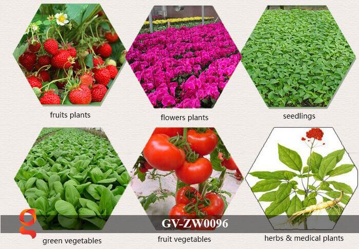 Đèn Led trồng cây, trồng rau GV-ZW0096 13