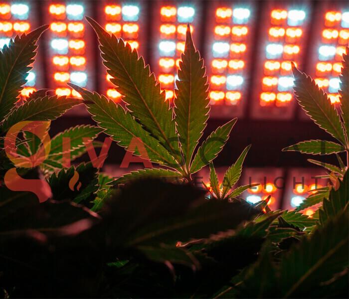 Đèn LED trồng cây có nhiệt độ thấp