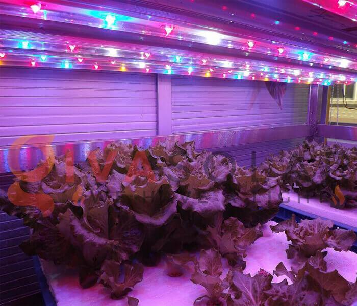 Những quan niệm sai lầm về đèn LED nông nghiệp 1
