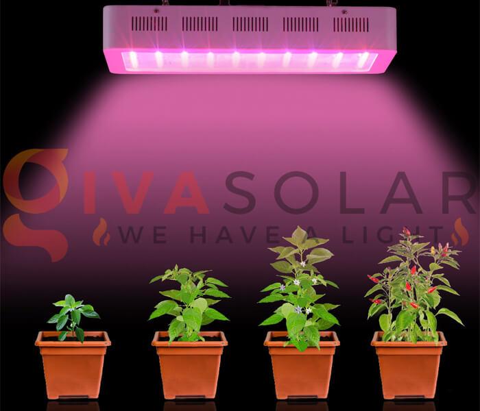 Những quan niệm sai lầm về đèn LED nông nghiệp 13
