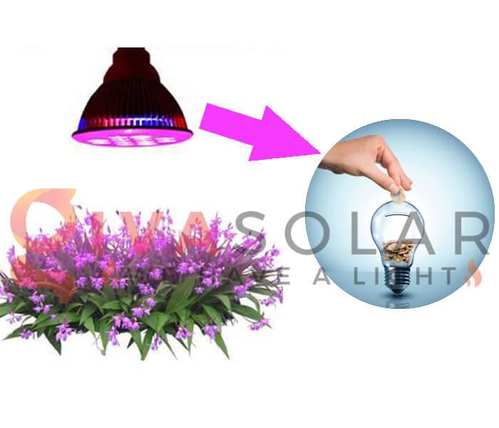 Những quan niệm sai lầm về đèn LED nông nghiệp 3