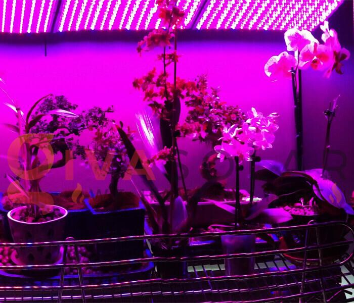 Những quan niệm sai lầm về đèn LED nông nghiệp 6