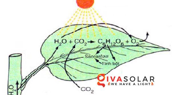 quá trình quang hợp của cây