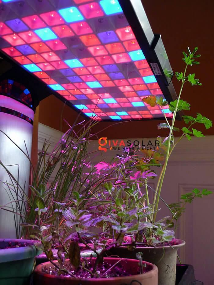 Tại sao đèn LED lại được ứng dụng vào trồng cây 3