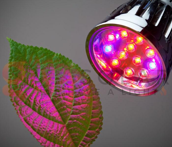 Hướng dẫn sử dụng đèn LED trồng cây 11