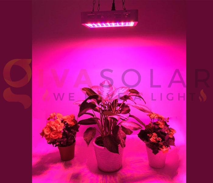 Hướng dẫn sử dụng đèn LED trồng cây 5