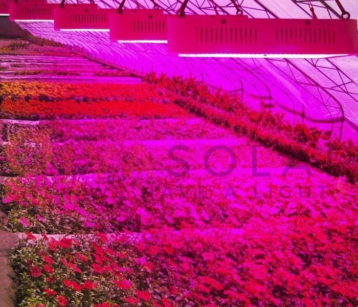 Hướng dẫn sử dụng đèn LED trồng cây 8