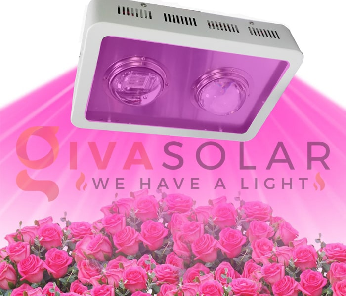 Những thông tin cần biết về đèn LED trồng cây 1