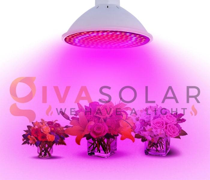 Những thông tin cần biết về đèn LED trồng cây 6