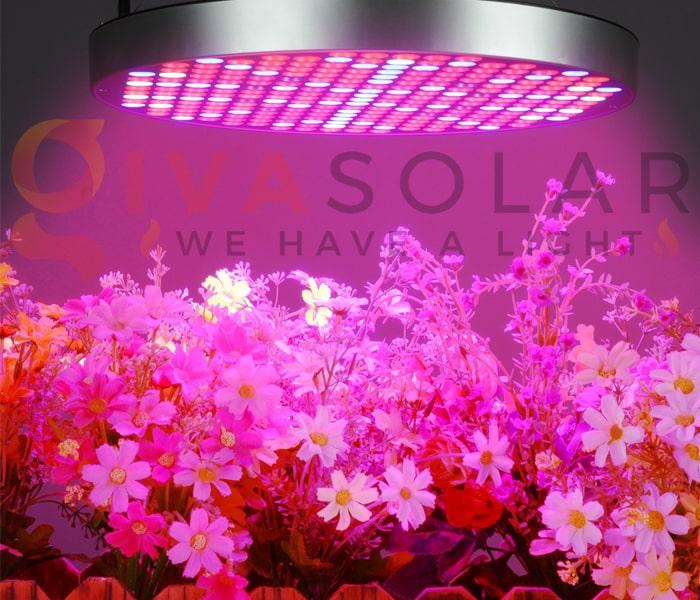 Trồng cây bằng đèn LED- FAQ 1