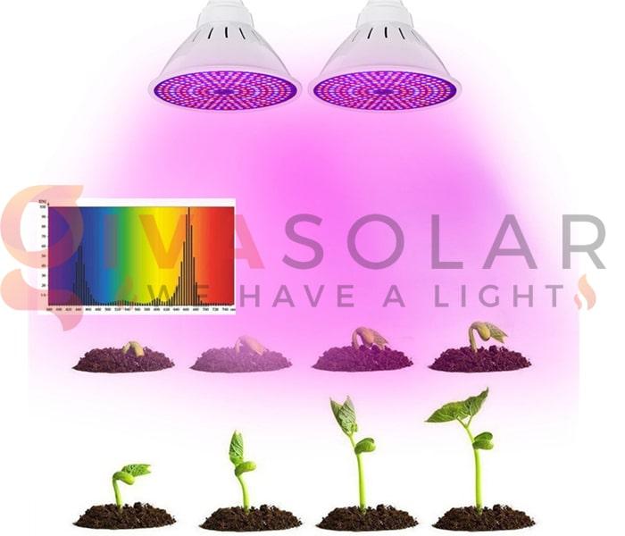 Trồng cây bằng đèn LED- FAQ 10