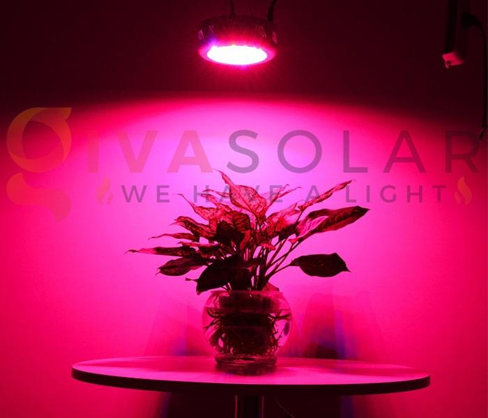 Trồng cây bằng đèn LED- FAQ 3