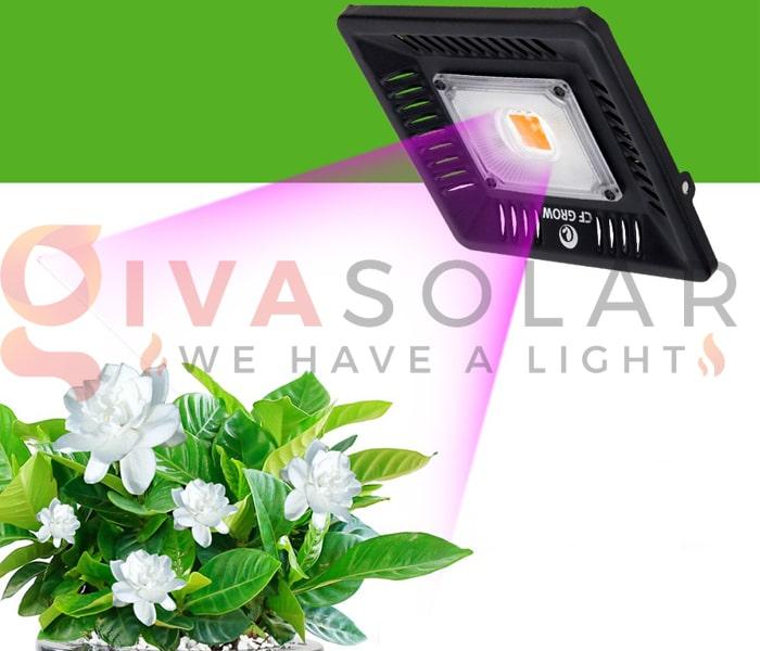 Trồng cây bằng đèn LED- FAQ 9