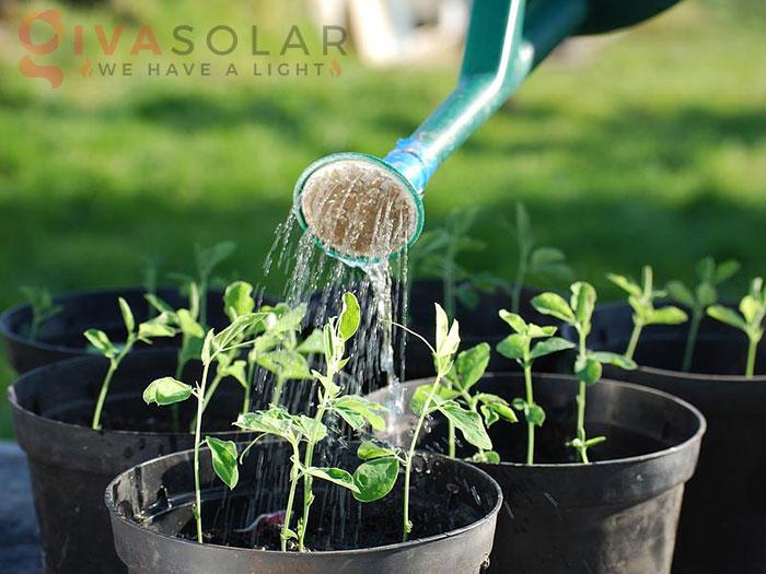 Tại sao đèn LED trồng cây có thể rút ngắn chu kỳ tăng trưởng của cây 2