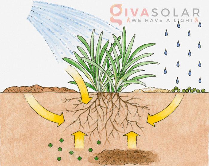 Tại sao đèn LED trồng cây có thể rút ngắn chu kỳ tăng trưởng của cây 3