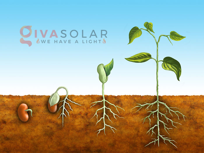 Tại sao đèn LED trồng cây có thể rút ngắn chu kỳ tăng trưởng của cây 4