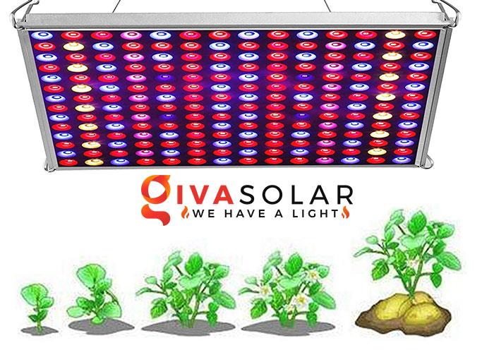 Tại sao đèn LED trồng cây có thể rút ngắn chu kỳ tăng trưởng của cây 5