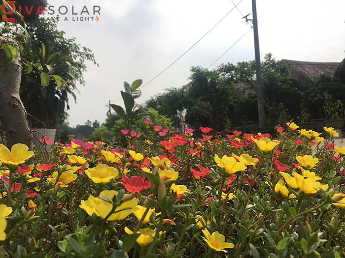 Dự án lắp đặt hệ thống đèn đường Solar ở Chùa Đồng Nai 1