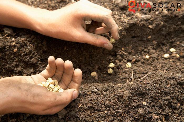 Quy trình trồng cây với đèn Led 2