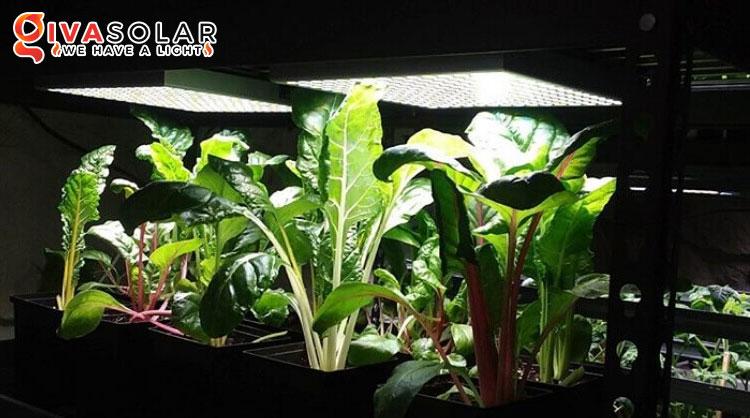 Quy trình trồng cây với đèn Led 3