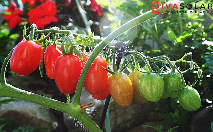 Quy trình trồng cây với đèn Led 5