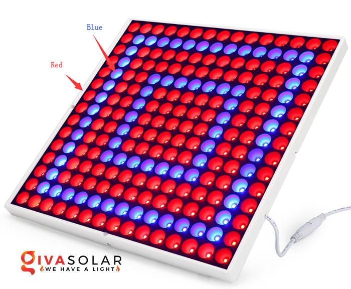 Tại sao ánh sáng đỏ nhiều hơn ánh sáng xanh trong đèn LED trồng cây 2