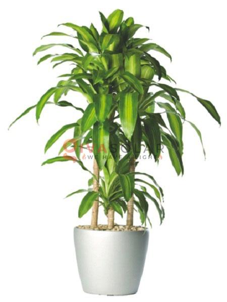 cây trồng trong nhà tốt nhất cho gia đình và văn phòng 12