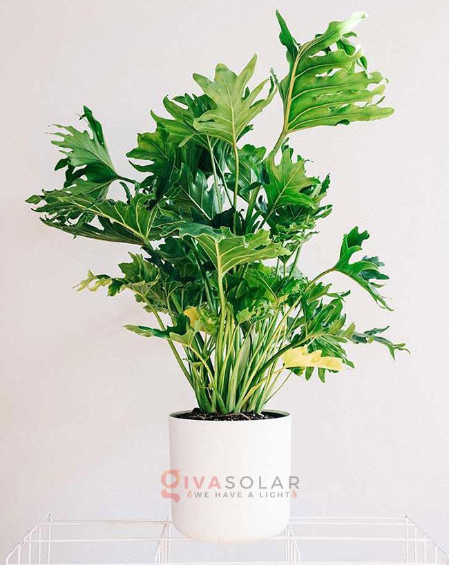 cây trồng trong nhà tốt nhất cho gia đình và văn phòng 4