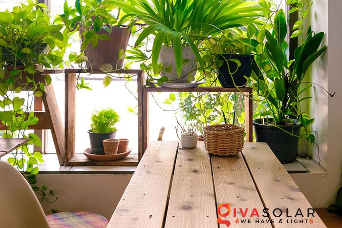 cây trồng trong nhà 1