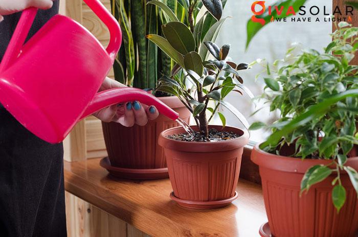cây trồng trong nhà 7