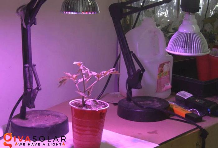 Nên đặt đèn quang hợp cách cây trồng bao xa 1