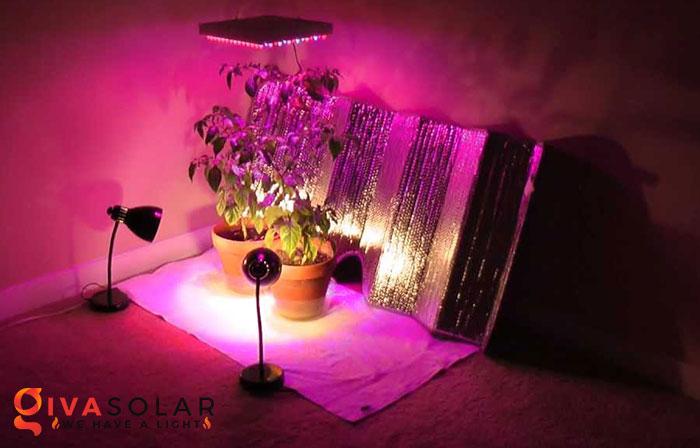 Nên đặt đèn quang hợp cách cây trồng bao xa 2
