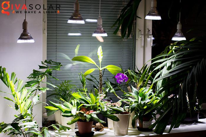 Nên đặt đèn quang hợp cách cây trồng bao xa 3
