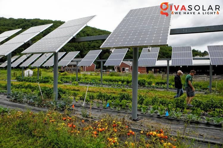 Điện mặt trời kết hợp với Nông Nghiệp 10